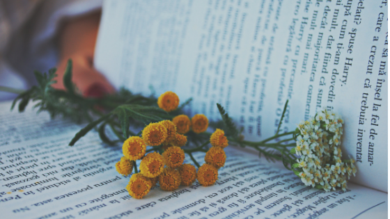 Flower on the Book